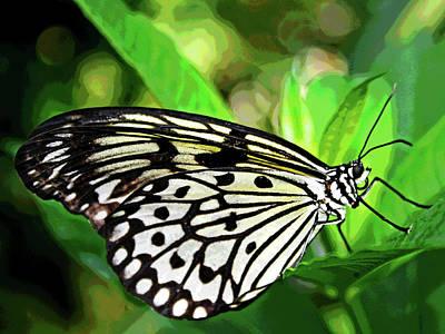 Key West Butterfly 2 Art Print