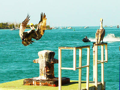 Photograph - Key West Landing by Susan Vineyard