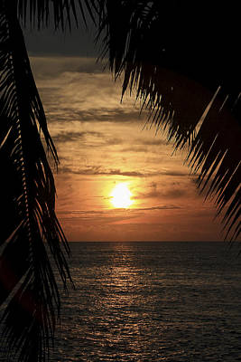 Photograph - Key West Palm Sunset 2 by Bob Slitzan