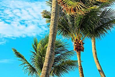 Firefighter Patents - Key West Palm Trees by Vicki Dreher