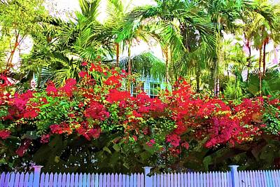 Photograph - Key West Reds by Alice Gipson