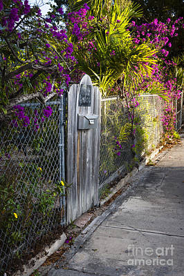 Photograph - Key West Street by Elena Elisseeva