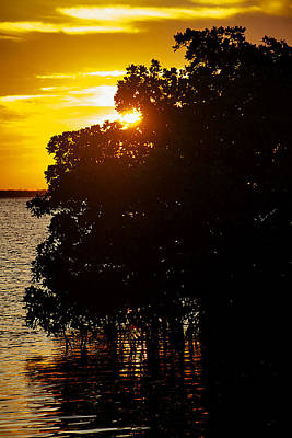 Photograph - Key West Sunrise Through The Mangroves by Bob Slitzan