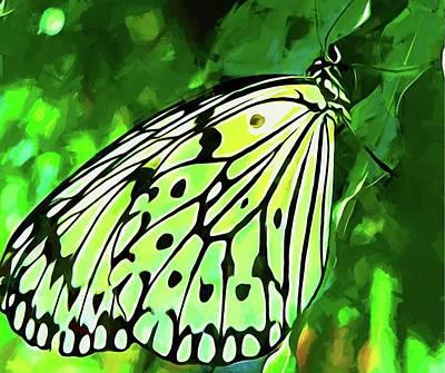 Photograph - Keys Butterfly by Alice Gipson