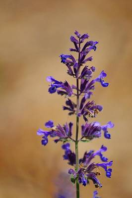 Photograph - Khaki And Lavender by Tim Good