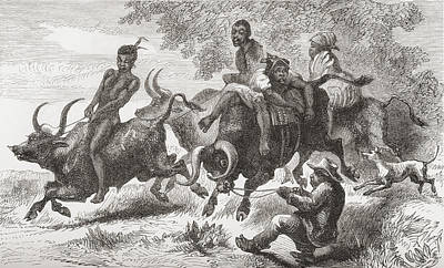 Native Drawing - Khoisan Natives Riding Pack Oxen In by Vintage Design Pics