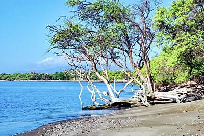 Photograph - Kiawe Tree At Mile 14 Beach  by Kirsten Giving