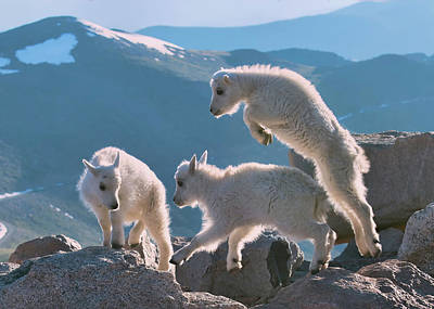 Mountain Goat Digital Art - Kids  by Lena  Owens OLena Art