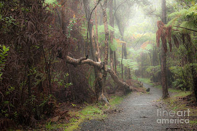 Kilauea Iki Trail At Dawn Art Print