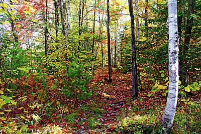 Photograph - Killarney Fall Forest by Debbie Oppermann