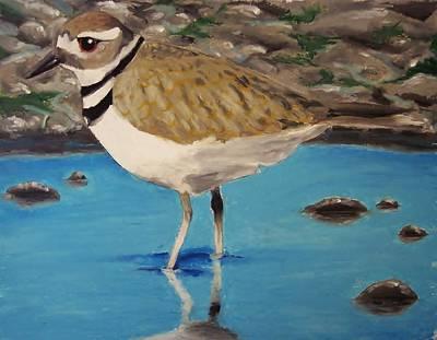 Killdeer Painting - Killdeer In Water by Anastasia Bisel