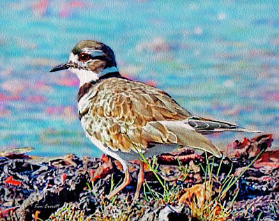 Killdeer Painting - Killdeer  by Ken Everett