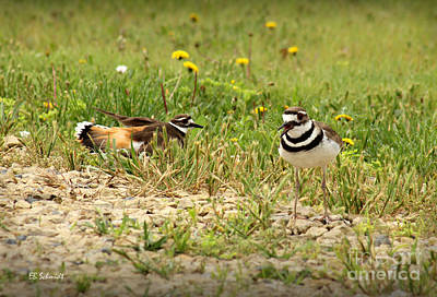 Photograph - Killdeer Theatrics by E B Schmidt