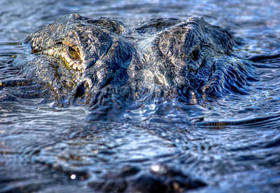 Alligator Photograph - Killer Instinct by Mark Andrew Thomas