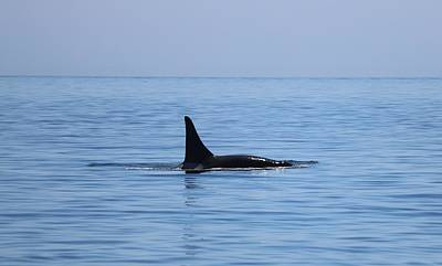Photograph - Killer Whale  by Christy Pooschke