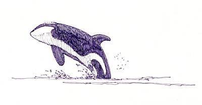 Killer Whale Art Print by John D Benson