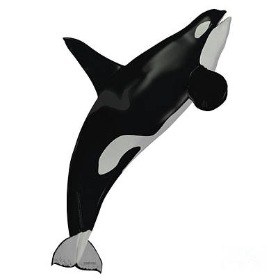 Killer Whale Male Art Print