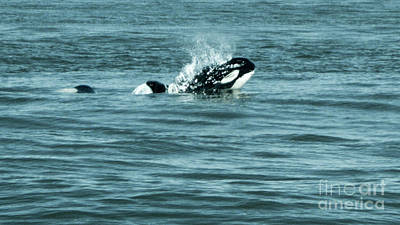 Photograph - Killer Whale by Wilko Van de Kamp