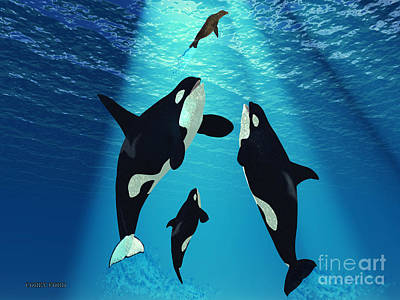 Orca Digital Art - Killer Whales by Corey Ford