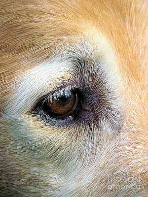 Dear Friend Photograph - Kind Eye by Elizabeth Dow