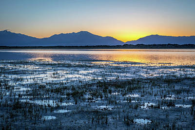 Wildlife Area Photograph - Kind Of Blue by Eric Glaser