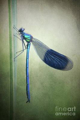 Kind Of Green Art Print by Rikard Strand