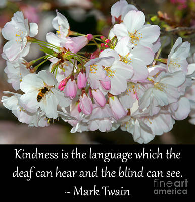 Photograph - Kindness Is The Language by Glenn Franco Simmons