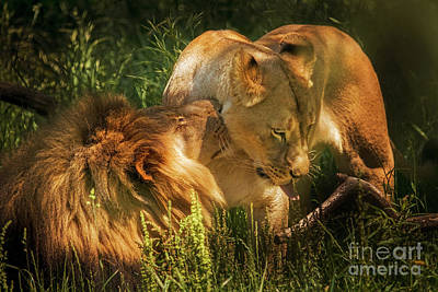 Photograph - King And His Lady by Sonya Lang