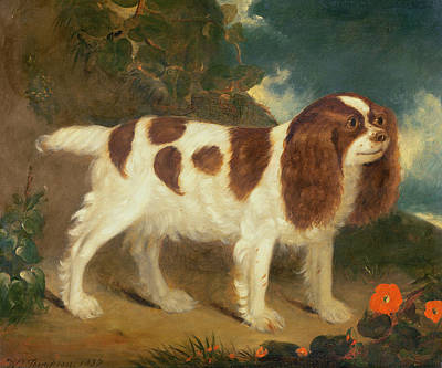 Red Flowers Painting - King Charles Spaniel by William Thompson