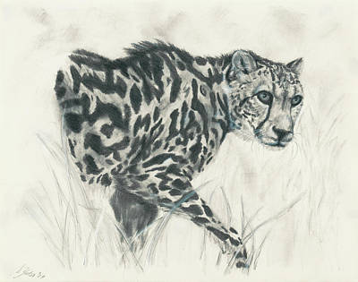 Cheetah Drawing - King Cheetah by Stephanie Yates