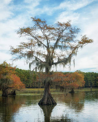 Photograph - King Cypress by Sheena LeAnn