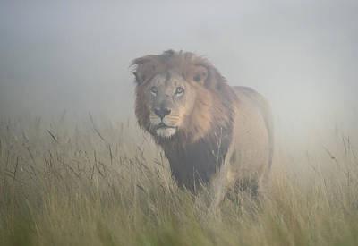 King In The Mist Print by Frits Hoogendijk