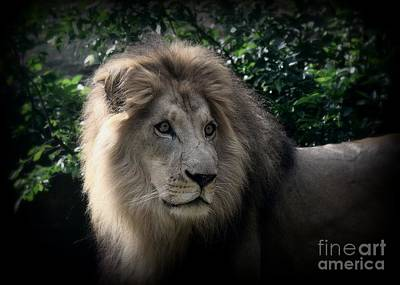 Photograph - King Kamau by Lisa L Silva