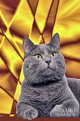 Digital Art - King Kitty With Golden Eyes by Janette Boyd