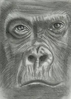 King Kong Drawing - King Kong by Paul Blackmore
