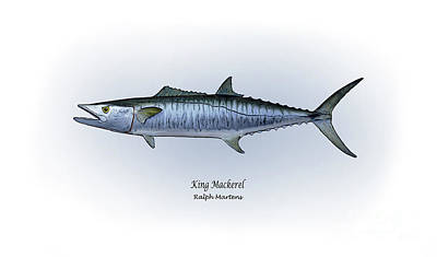 King Mackerel Art Print by Ralph Martens