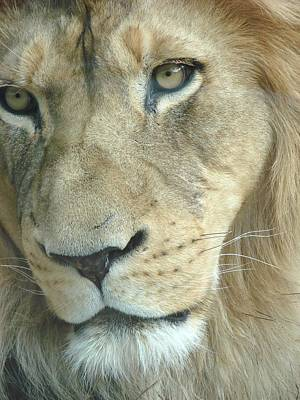 Art Print featuring the photograph King by Margaret Bobb