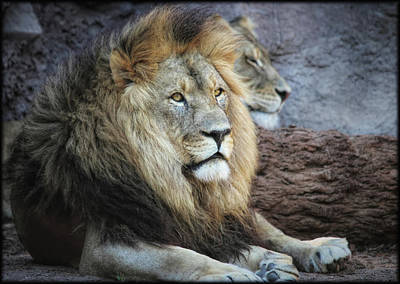 Photograph - King N Queen by Elaine Malott