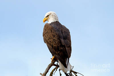 Eagle Photograph - King Of Birds by Beve Brown-Clark Photography