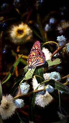 Photograph - King Of The Butterflies - 1 by Susan Rissi Tregoning