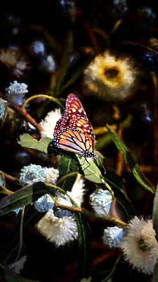 Photograph - King Of The Butterflies - 2 by Susan Rissi Tregoning