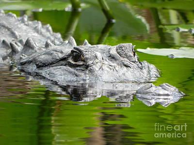 King Of The Florida Jungle Art Print by Jack Norton