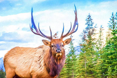 Photograph - King Of The Forest by Judy Wright Lott