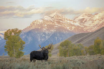 Photograph - King Of The Gros Ventre by Sandy Sisti