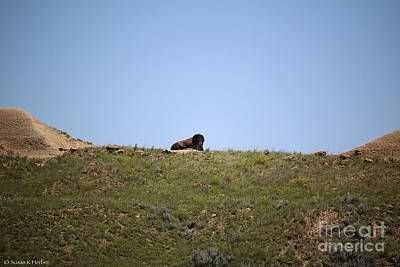 Photograph - King Of The Hill by Susan Herber