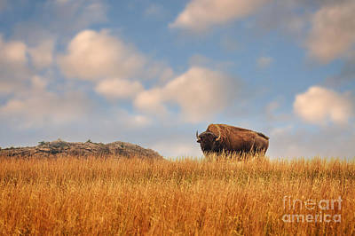 Photograph - King Of The Hill by Tamyra Ayles