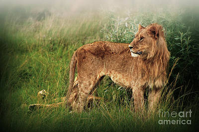 Photograph - King Of The Jungle by Charuhas Images