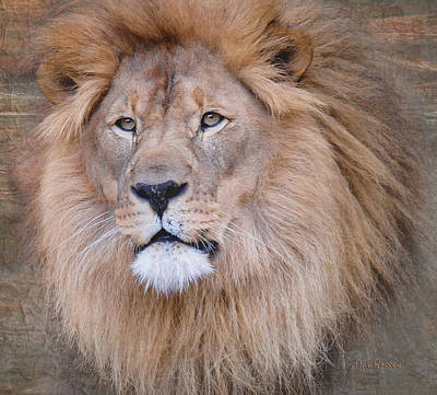 Photograph - King Of The Jungle by Dyle   Warren