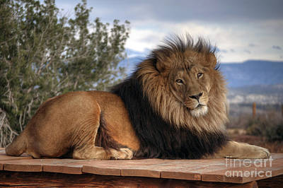Simba Photograph - King Of The Jungle by Eddie Yerkish
