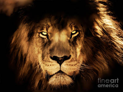 Digital Art - King Of The Jungle - Lion Digital Painting by Tracey Everington